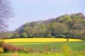 Landscaped field — Stock Photo