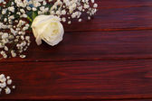 White rose on wooden background — Stock Photo