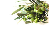 Olives on branch — Stock Photo