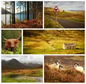 Different landscape and animals from Scotland — Stock Photo