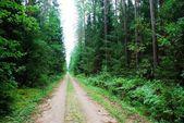Floresta verde e estrada no horário de verão — Fotografia Stock