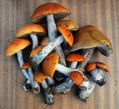 Orange-cap boletus growing in the forest — Stock Photo
