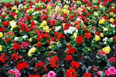 Different decorative pink, red, green flowers background — Stok fotoğraf