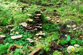Forest with stump and mushrooms autumn view — Stockfoto