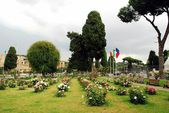 Roses in the garden of Rome city on May 31, 2014 — Stockfoto