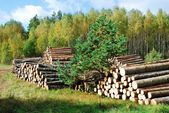 Stack of prepared wood in european forest — Stockfoto