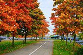 Vilnius city street view at autumn time — Foto de Stock