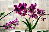 Close up picture of a orchid on a city background — Stock Photo