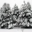 Fresh snow cover, at winter time in Vilnius city — Stock Photo #67064653
