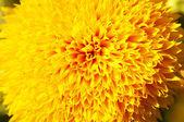 Part of sunflower — Stock Photo