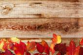 Autumn background with colored leaves on wooden boards — Stock Photo