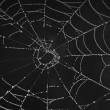 Cobweb with morning dew — Stock Photo #55433765