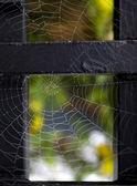 Cobweb with morning dew — Stock Photo