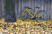 Vintage yellow bike in autumn — Stock Photo