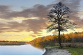 Bare tree by water in autumn — Photo