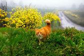 Hunting ginger cat — 图库照片