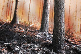 Forest on fire with scorched trees — Stock Photo