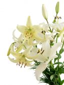 Posy of lilies — Stock Photo