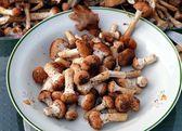 Peeling i przygotowywaniu grzybów jadalnych Opieńka ciemna — Zdjęcie stockowe