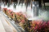 Water springer inter the garden — Foto de Stock