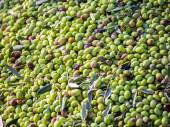 Closeup of olives in a olive oil machine — Stock Photo