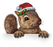 Holiday Squirrel — Fotografia Stock