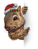 Holiday Squirrel Vertical — Stock Photo