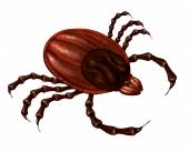 Tick Insect — Stockfoto