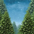 Winter Tree Background — Stock Photo #80972210