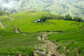 Terraced Rice Field — Stock Photo