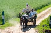 Locals on a cart loaded with grass in India — Stock Photo