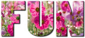 Fun text with pink flowers — Stock Photo