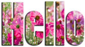 Hello text filled with pink flowers — Stock Photo