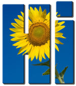 Text Hi with an image of sunflower — Stock Photo