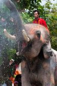Elephant splashing water during Songkran Festival — Stock Photo
