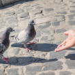 A man feeding pigeons with his hands. A symbol of peace. — Stock Photo #57077673