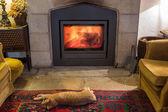 Röd katt sola av vid brasan i den mysiga rum. Brinnande eld. — Stockfoto