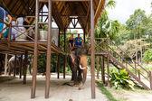 Tourist excursion, show of elephants, to Samui — Stockfoto