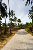 Road in the palm jungle of Thailand — Stock Photo