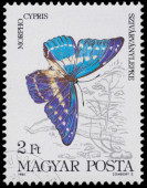Stamp printed in Hungary shows a butterfly — Stock Photo