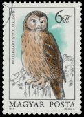 Stamp shows image of an Ural Owl — Stock Photo