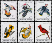 Stamp printed in Hungary shows Common Flicker — Stock Photo