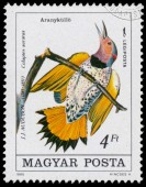 Stamp printed in Hungary shows northern flicker — Stock Photo