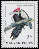 Stamp printed in Hungary shows Pileated Woodpecker — Stockfoto