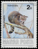 Stamp printed in Hungary shows Wildcat — Stok fotoğraf
