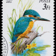 Stamp printed in Hungary shows the Common kingfisher — Stock Photo #62257469