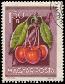 Stamp printed in Hungary shows Cherries — Stock Photo
