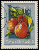 Stamp printed in Hungary shows Plums — Stockfoto