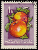 Stamp printed in Hungary shows Apples — Stockfoto