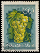 Stamp printed in Hungary shows Grapes — Stockfoto